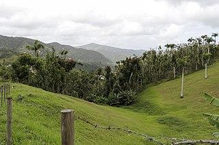 San Lorenzo, Puerto Rico Town and municipality of Puerto Rico