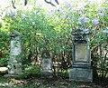 Sankt Marxer Friedhof Fliederblüte.jpg