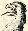 Sasfej (heraldika).PNG