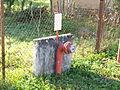 Savigny-en-Terre-Plaine-FR-89-bouche d'incendie-01.jpg