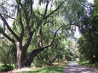 Scotchmans Creek Trail