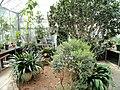 Seasonal Display House - Wellesley College - DSC09724.JPG