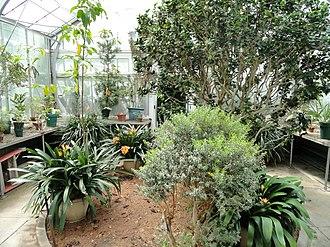 Margaret Clay Ferguson - Seasonal Display House in the Margaret C. Ferguson Greenhouses at Wellesley College.