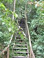 Selva - panoramio (3).jpg