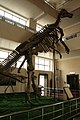 Shantungosaurus.jpg