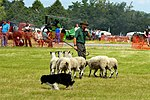 Sheep Dog Display (2621818878).jpg