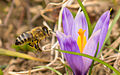 Sign of spring (16242843443).jpg