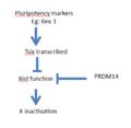 Simplified Tsix gene regulation flowchart.png