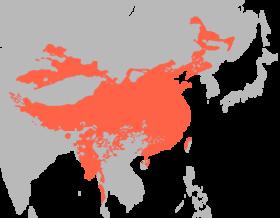 Sino-tibetan languages