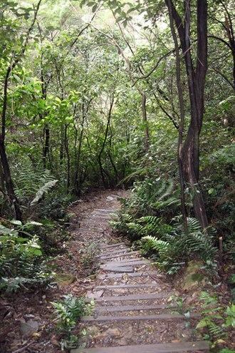 Six Foot Track - Image: Six Foot Track Nellies Glen