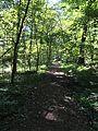 Sleepy Hollow - Montour Trail Connector.jpg