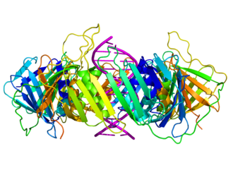 DNA clamp - Image: Sliding clamp dna complex side