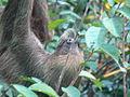 Sloth8.jpg