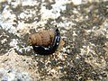 Snail and ? (3976004953).jpg
