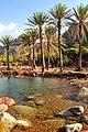 Socotra - panoramio - blackseav.jpg