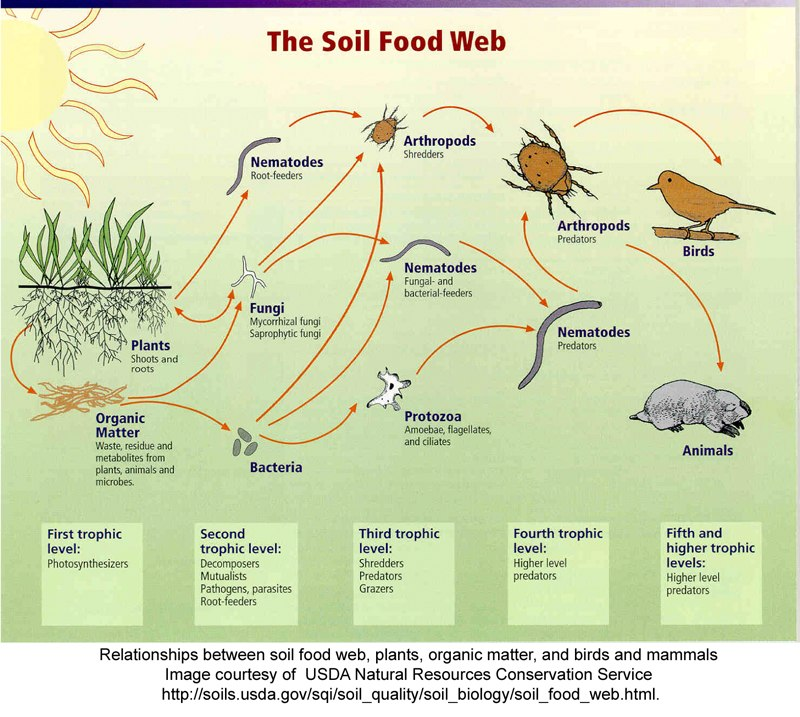 Soil food webUSDA