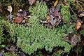 Sottobosco del biotopo.jpg