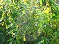 Spinnennetz im Dosenmoor.JPG