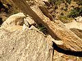 Spiny Cliffbrake Habitat - Flickr - treegrow.jpg