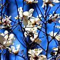 Spring (2482621447).jpg