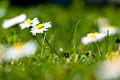 Spring (5606839444).jpg