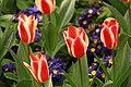 Spring in London (6967717656).jpg