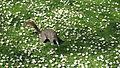 Spring in St. James Park - London (3720861521).jpg