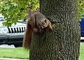 Squirrel 01 (6848236722).jpg