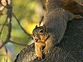 Squirrel at Lake Merritt.jpg