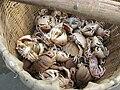 Strange crabs - Mui Ne Vietnam.JPG
