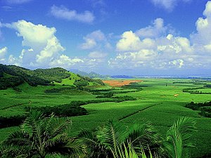 Sugarcane plantation in Mauritius (reduced colour saturation)