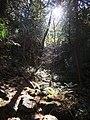 Sunlight through the trees (5091404042).jpg