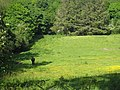 Sunny pasture in Lamorna Valley - geograph.org.uk - 820003.jpg