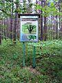 Svitiaz Shatskyi Volynska-Shatskyi NNP-board of ecological path.jpg