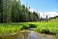 Swamps and forests in the Valdai National Park.jpg