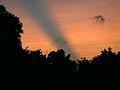 Swarm of insects in Geneva, Illinois - Flickr - Jay Sturner.jpg