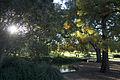 Sydney botanic garden - panoramio - Maksym Kozlenko (2).jpg