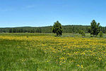 A meadow with wildflowers.