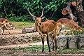TamanSafariIndonesia110.jpg