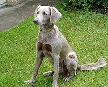 Kennel Club Dog Training Certification
