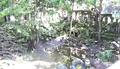 Temple de Beng Meala - Angkor 24.png