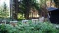 Thüringen-Dunkelwäldle-Waldbienenstand-02.jpg