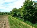 Thames Path, near Hannington Wick, Swindon - geograph.org.uk - 441152.jpg