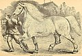 The American farmer's horse book; a pictorial cyclopedia of facts concerning the prominent breeds (1892) (18093415526).jpg