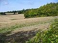 The Boxwood - geograph.org.uk - 993302.jpg