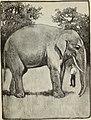 The Brooks primer (1906) (14576548010).jpg