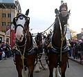 The Budweiser Clydesdales outside Progressive Field before World Series Game 6. (30721261495).jpg
