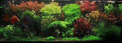 Dutch style underwater landscape