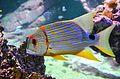 The Fish (13959779015).jpg