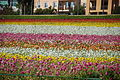 The Flower Fields at Carlsbad Ranch 94 2014-04-28.jpg